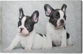 Lerretsbilde To franske bulldog valper