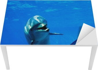 Masa Çıkartması Delfin