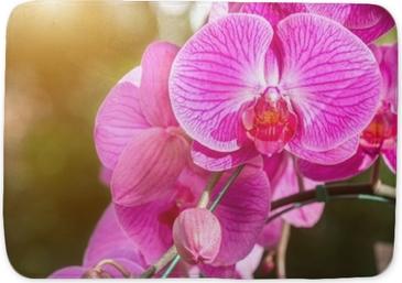 Mata łazienkowa Kwiat orchidei w ogrodzie w zimie lub wiosenny dzień dla pocztówki piękna i rolnictwa pomysł koncepcja. storczyki są eksportowane produkty biznesowe z Tajlandii, które zarabiają dużo pieniędzy.