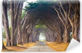 Mural de Parede Autoadesivo Ponto reyes cyress árvore túnel