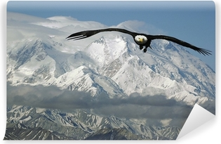 Mural de Parede em Vinil bald eagle in mountains