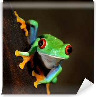 Mural de Parede em Vinil red-eye frog Agalychnis callidryas in terrarium