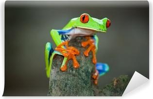 Mural de Parede em Vinil Rotaugenfrosch, Frog, Costa Rica