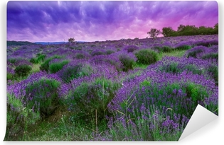 Mural de Parede em Vinil Sunset over a summer lavender field in Tihany, Hungary