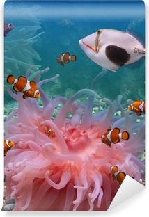 Mural de Parede em Vinil Tropical fishes