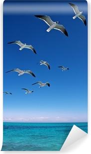 Mural de Parede em Vinil Various seagulls flying over a blue sea