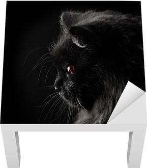 Dyptyk Czarny Kot Perski Na Czarnym Tle Pixers żyjemy By Zmieniać