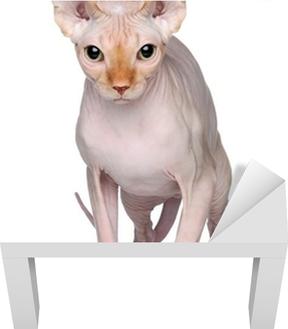 Naklejka Na Lodówkę Kot Sfinks Na Białym Tle Pixers żyjemy By