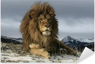 Naklejka Pixerstick Barbary lew Panthera leo leo