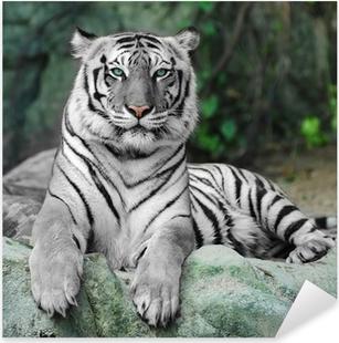 Naklejka Pixerstick Biały tygrys na skale w zoo