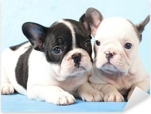 Naklejka Pixerstick Buldog francuski puppy
