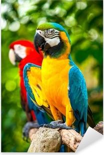 Naklejka Pixerstick Kolorowe niebieski papuga ara