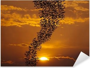 Naklejka Pixerstick Latające nietoperze againt słońcu
