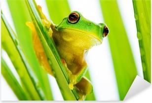 Naklejka Pixerstick Mała zielona żaba drzewo na gospodarstwo drzewa palmowego