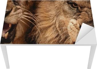Naklejka na biurko i stół Close-up strzał z dwóch lew ryczący