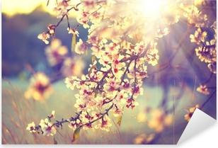 Naklejka Pixerstick Piękna przyrody sceny z kwitnącego drzewa i flary słońca