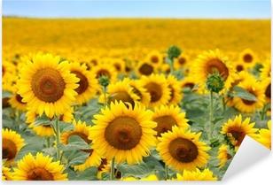 Naklejka Pixerstick Piękne pole słoneczników