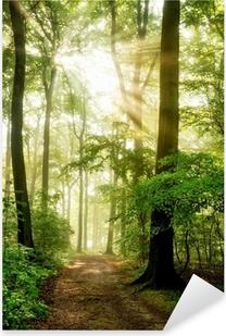 Naklejka Pixerstick Rano słońce świeci w mglisty las