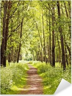Naklejka Pixerstick Ścieżka w słonecznym lesie latem
