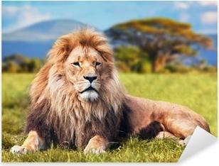 Naklejka Pixerstick Wielki lew leżący na sawannie trawie. Kenia, Afryka