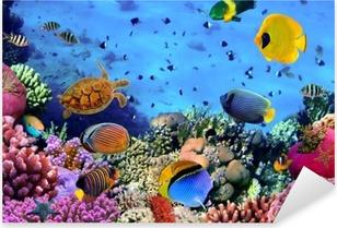 Naklejka Pixerstick Zdjęcie z koralowców kolonii