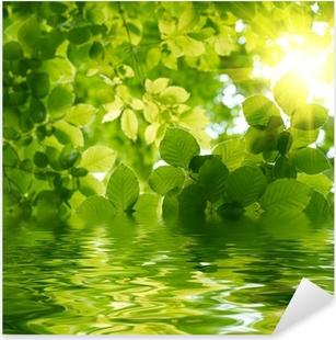 Naklejka Pixerstick Zielone liście z promień Słońca.