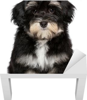 6f1f4c42ace Fototapeta Lover Valentine Havanský psík štěně s červeným srdcem • Pixers®  • Žijeme pro změnu