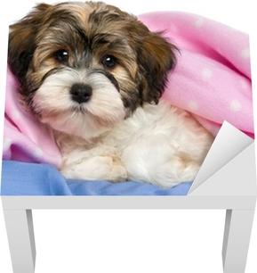 e54dc98f9b6 Plakát Lover Valentine Havanese pes štěně psa drží červené srdce • Pixers®  • Žijeme pro změnu