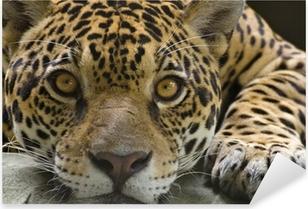 Nálepka Pixerstick Big cat jaguar při pohledu na fotoaparát