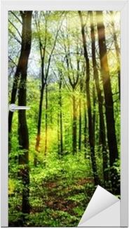 Nálepka na Dveře Jarní sluníčko v bukovém lese