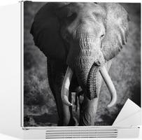 Nálepka na Ledničku Elephant Bull (Artistic zpracování)