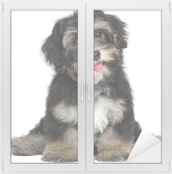 5c0be6bcb82 Plakát Krásná usměvavá čokoládovou havanský psík štěně • Pixers® • Žijeme  pro změnu