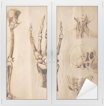 Fototapeta Stare Kresby Anatomie Casti Tela Pixers Zijeme Pro