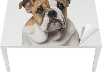 b06c8c01d46 Obraz na plátně Anglický buldok štěně (3 měsíce) • Pixers® • Žijeme pro  změnu