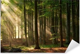 Nálepka Pixerstick Podzimu lesních dřevin. příroda zelená dřevo slunečnímu záření pozadí.