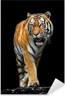 Nálepka Pixerstick Tiger na černém pozadí