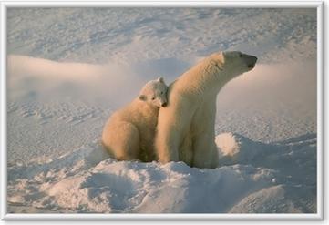 Obrazek w ramie Niedźwiedź polarny z jej cub w kanadyjskiej Arktyce