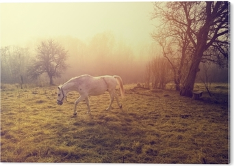 Obraz na Aluminium (Dibond) Piękny biały koń