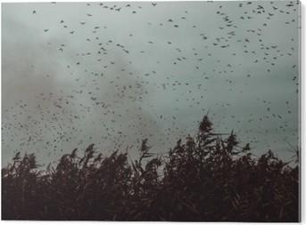 Obraz na Hliníku (Dibond) Banda ptáků letící v blízkosti třtiny v temném sky- vintage stylu black and white