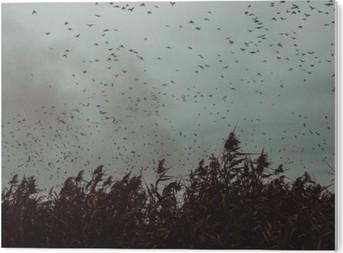 Obraz na PCV Pęczek ptaki latające blisko trzciny w ciemnym sky- stylu vintage black and white