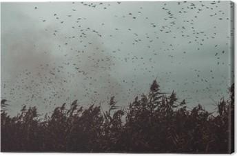 Obraz na plátně Banda ptáků letící v blízkosti třtiny v temném sky- vintage stylu black and white