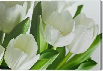 Obraz na Plátně Bílé tulipány