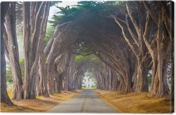 Obraz na plátně Bodový reyes cyrus tree tunel
