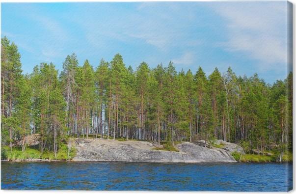 Obraz na plátně Borovice lesní rostoucí na skalách - Lesy