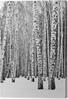 Obraz na plátně Březový les v zimě v černé a bílé