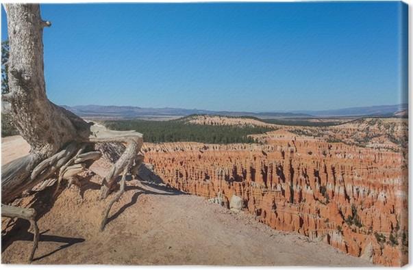 Obraz na plátně Bryce Canyon - Amerika