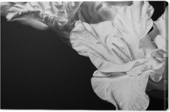 Obraz na Plátně Černá a bílá mečík