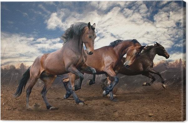 Obraz na plátně Divoký skok bay koně - Témata