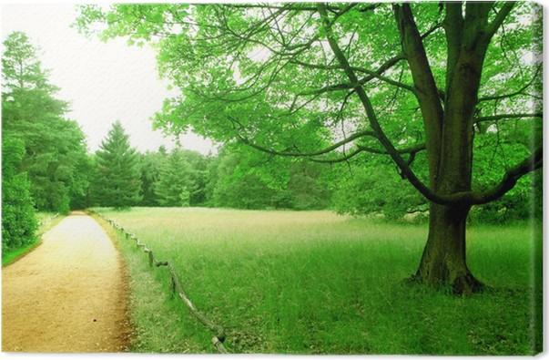 Obraz na plátně Green Park - Lesy