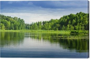 Obraz na Plátně Jezero a les.